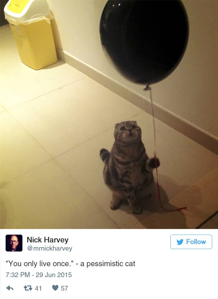 image of a cat holding a balloon